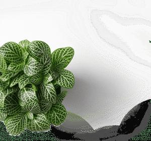 Plante toulon, la garde